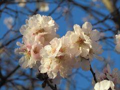 Printemps - Frühling