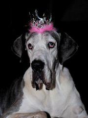 Prinzessin Lilli