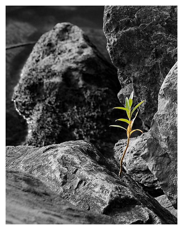Prinzip Hoffnung