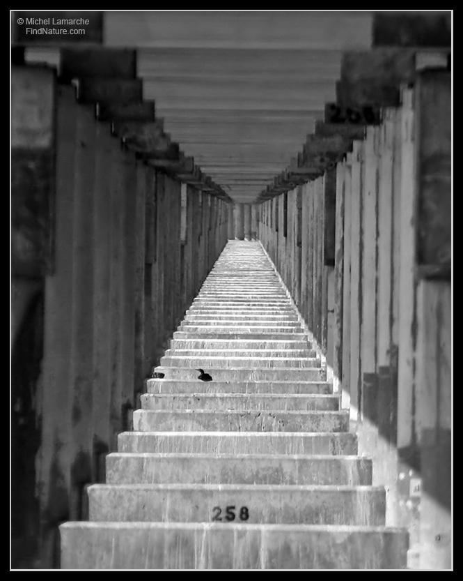 Prisoner # 258