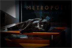 Privilegierter von Metropolis?