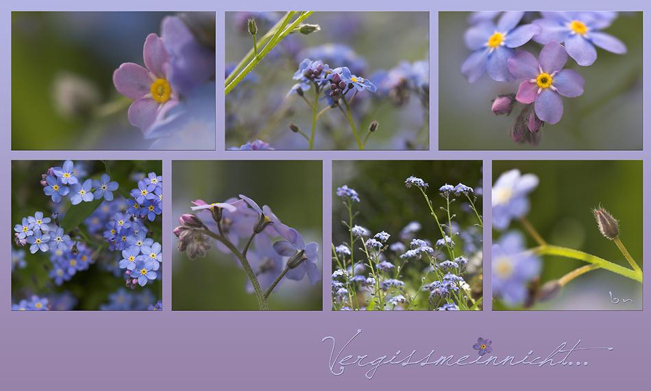 Pro peller Blüten