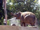 Prösterchen... Lächelnder Elefant in der Wilhelma