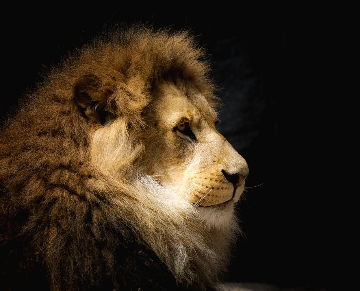 Profil eines Königs