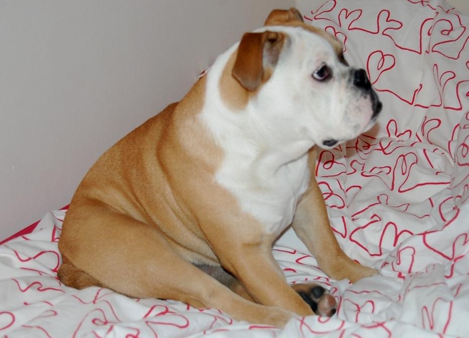 Profil muß ein Hund haben! :))
