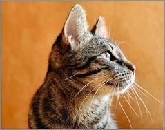 Profilo di gatto