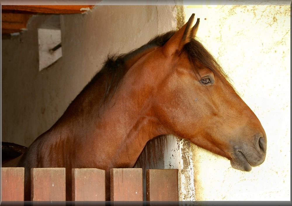 Profilo di modello cavallo.