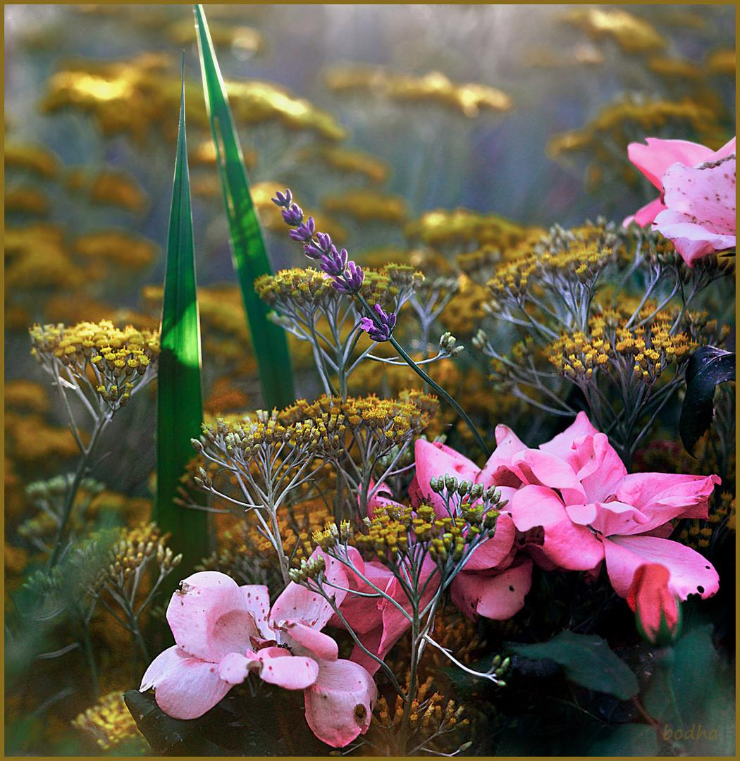 Profumi e colori... del mio giardino