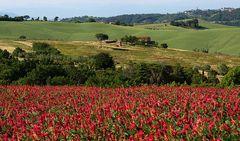 profumi e colori della campagna pisana