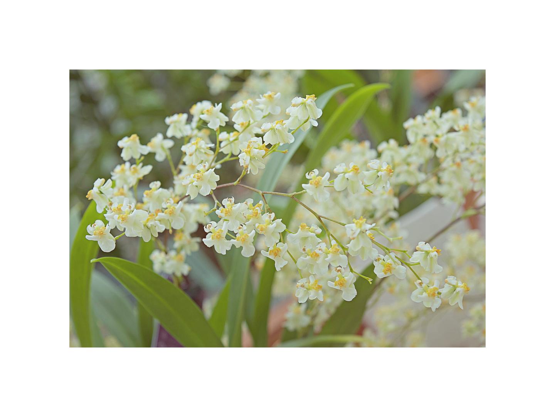 profumo di primavera -1