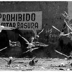 - prohibido votar basura -