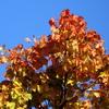 Projekt Herbst