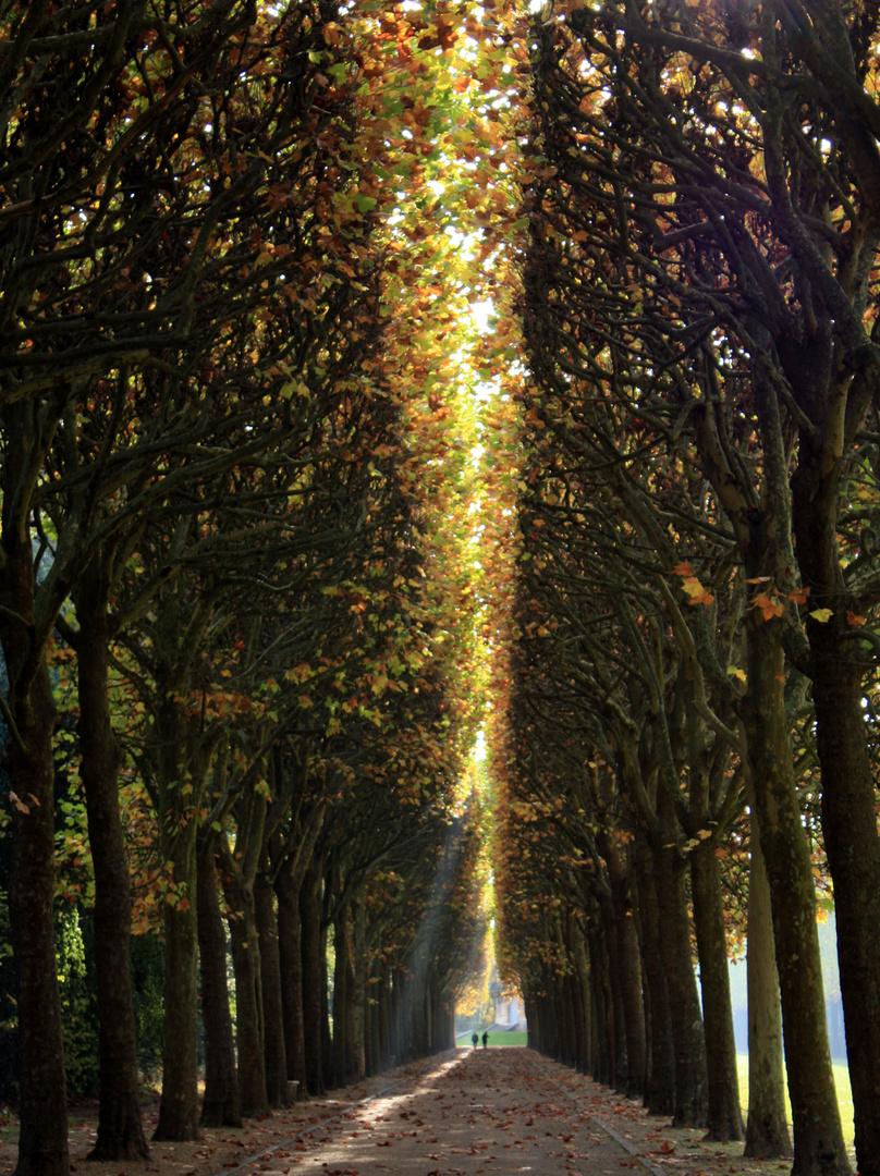 Promenade automnale au Parc de Sceaux...