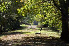 Promenade forestière
