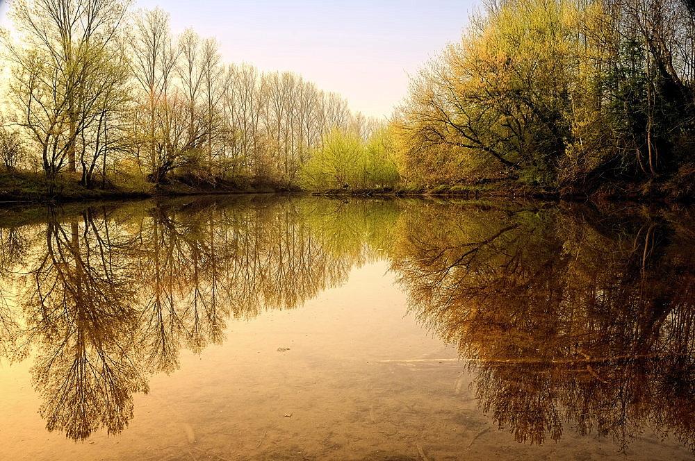 Promenade matinale dans les lônes du Rhône (2/3)