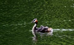 """"""" Promenade sur l'étang """""""