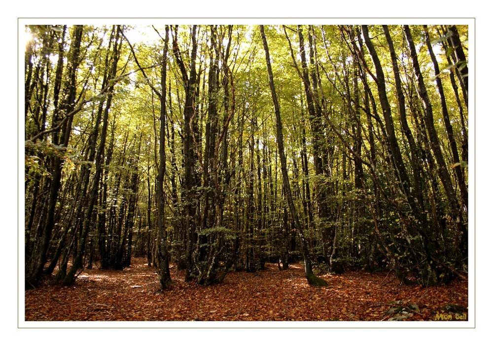 Promenons nous dans les bois . . .