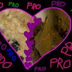PROOO! Verliebt in fc!