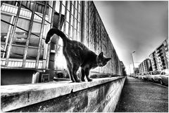 Prospettive feline