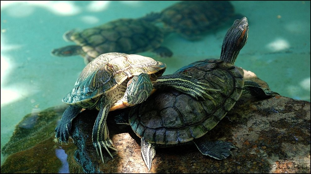 Protection des tortues