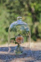 Protégez -moi de la pluie
