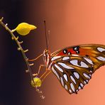 Proud Butterfly - Resumbitted