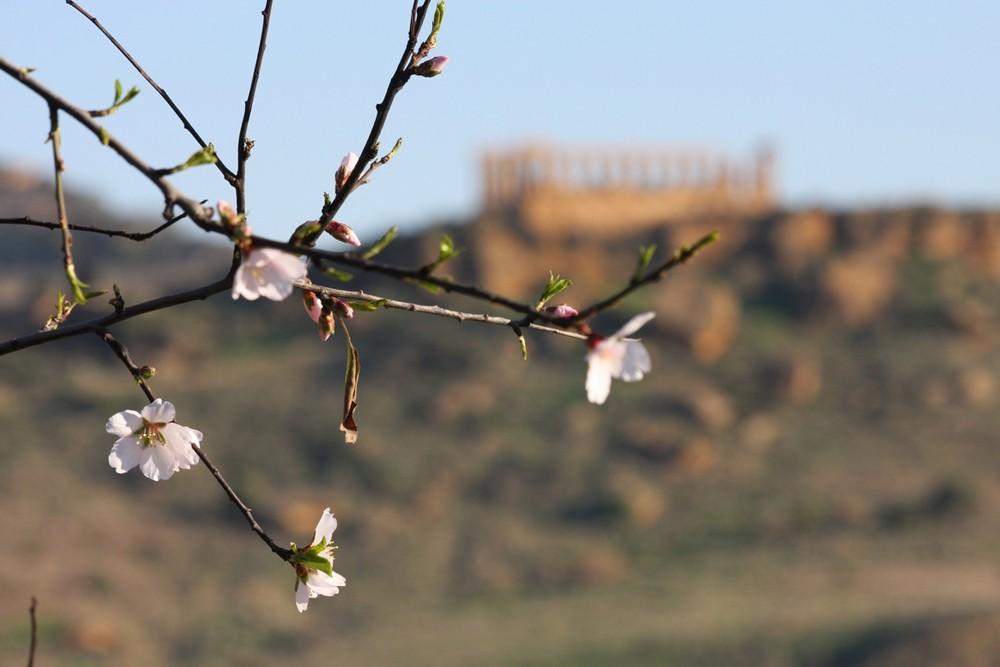Prove generali di primavera: Agrigento 30 gennaio