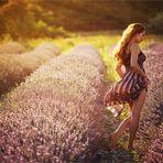* provencal summer *