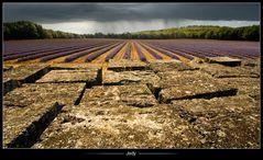 •Provence•