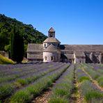 Provenza / 3 abbazia di Senanque