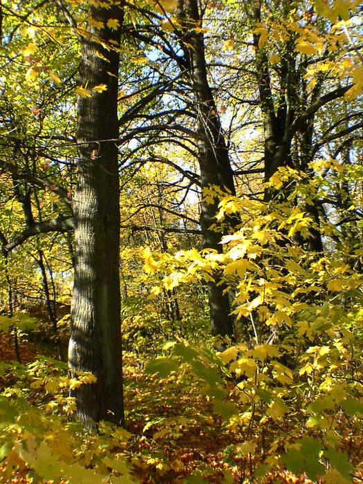 Pskower Herbst