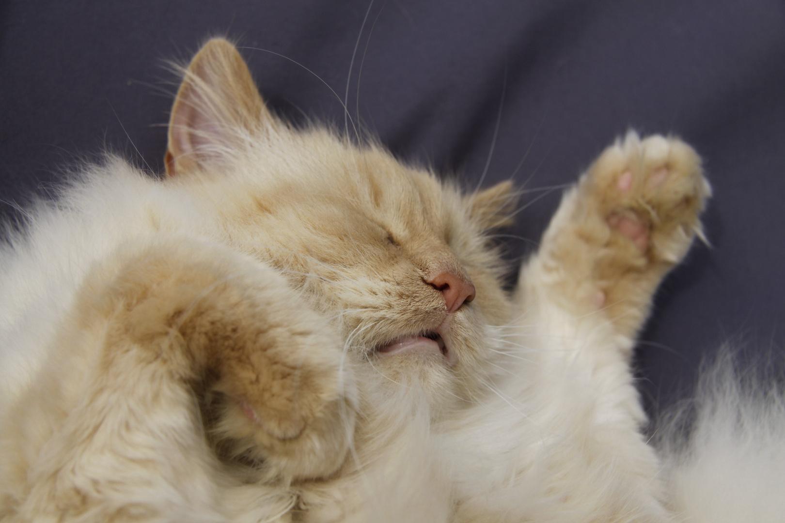 PSST: Merlin schläft