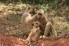Ptite famille (réserve de Shimba: KENYA)