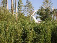Puente del Tercer Milenio 01: Vistas desde el Parque del Agua