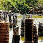 Puente en ruinas Coveñas Colombia