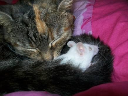 Püppi und Mausi oder eine ungewöhnliche Freundschaft