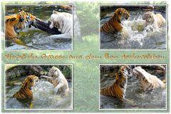 Puhdy und Kiara beim Spielen im Wasser
