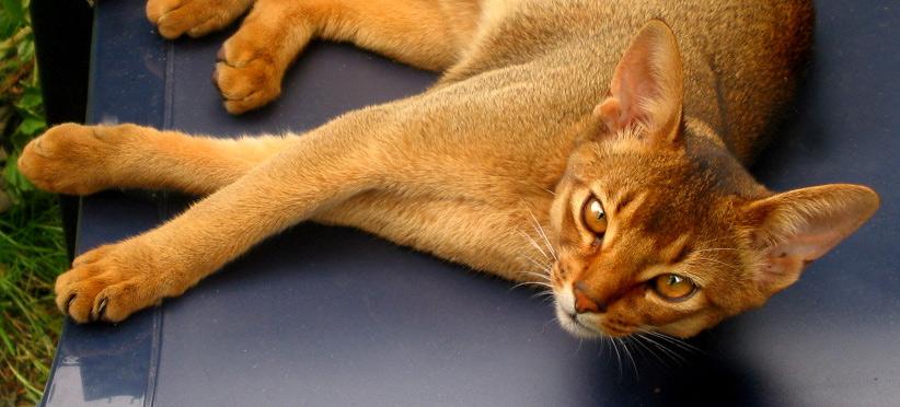 Puma geniesst das subtropische Wetter ....