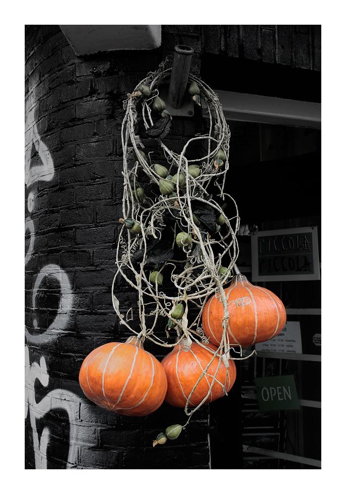 Pumpkin, pumpkin, pumpkin