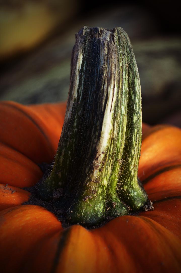 Pumpkintime :o)