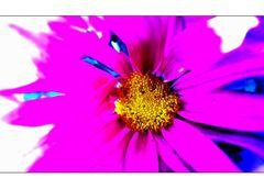 Punk Flower...