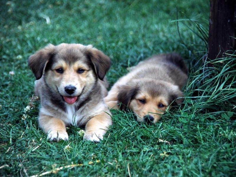 _ ) puppies ( _