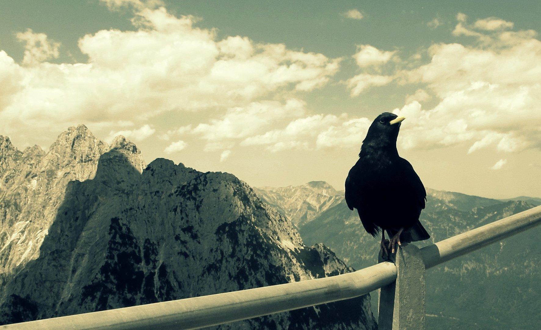 pure Freiheit.
