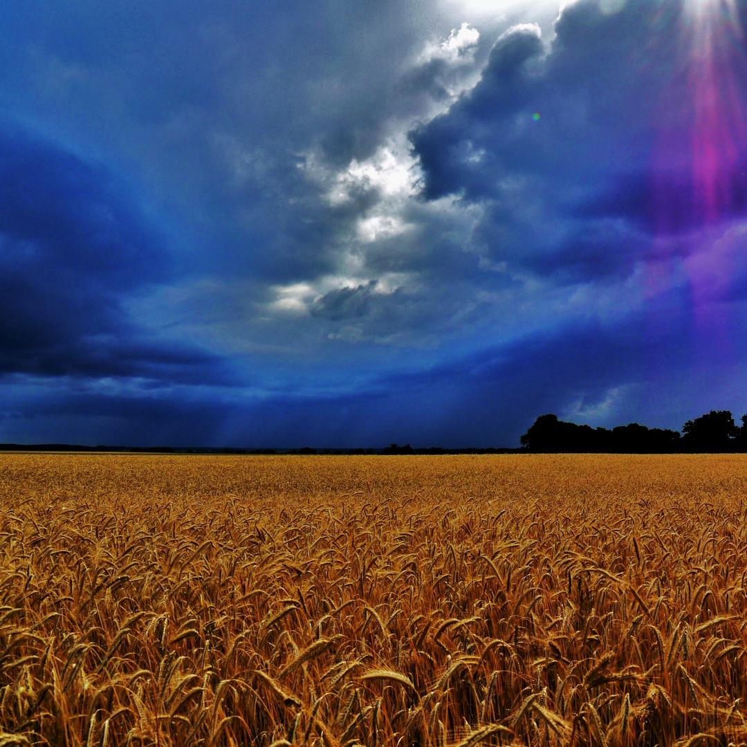 pure nature....