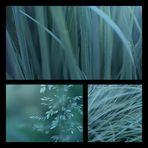 Pure Nature – Grass