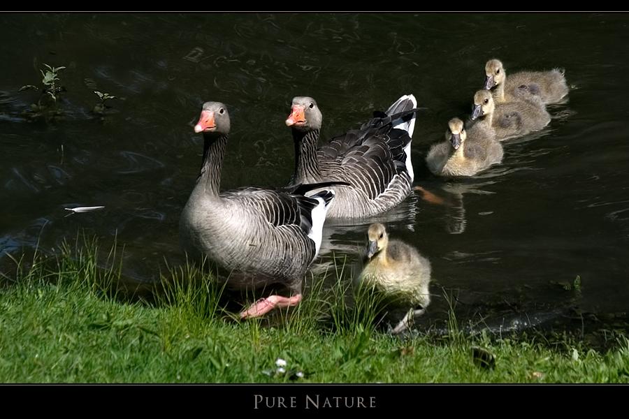 Pure Nature III - Großer Macho, kleiner Macho
