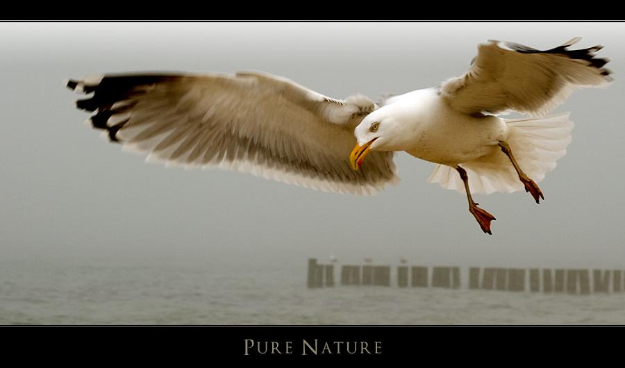 Pure Nature V - Möve