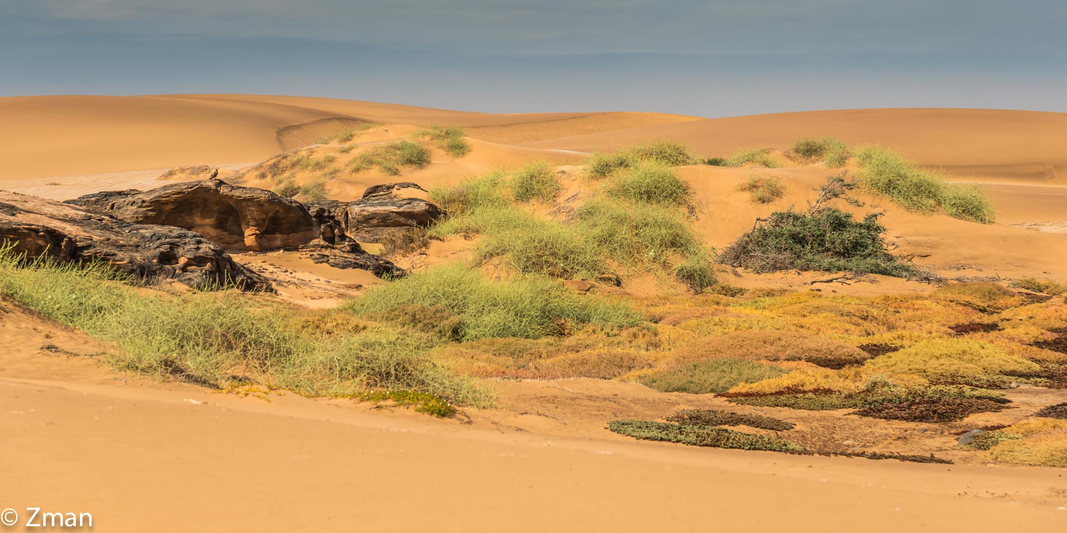 Purity Of The Desert 02