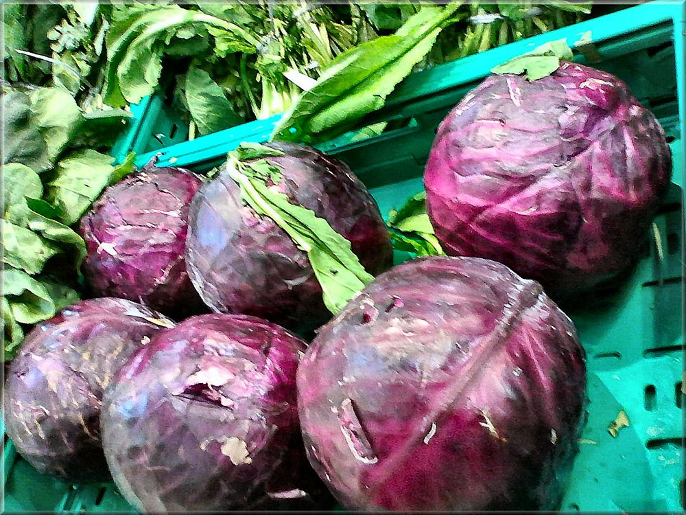 Purple cabbages