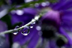 * Purple *